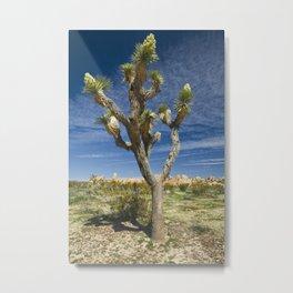 Joshua Tree in Joshua Tree National Park Metal Print