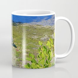 Yellow-crowned Night Heron Snack Coffee Mug