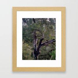 Chard Tree Framed Art Print