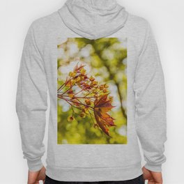 Maple blooms Hoody