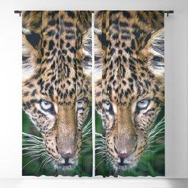 Splendid Beautiful Jungle Leopard Staring Head Profile Close Up Ultra HD Blackout Curtain