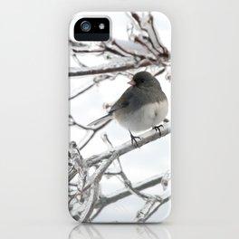 Junco Winter Bird iPhone Case