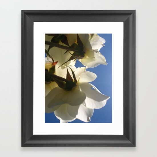 Translucent Roses IV Framed Art Print