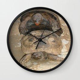 Humorous Mating Tortoises Wall Clock