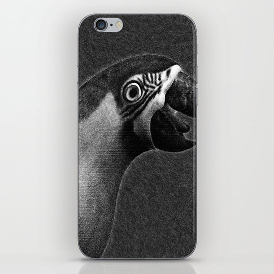 Macaw Portrait iPhone & iPod Skin