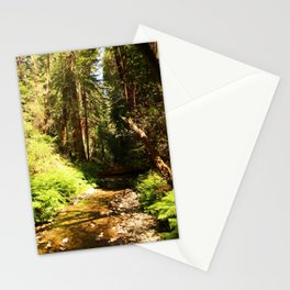 A Muir Woods Scene Stationery Cards