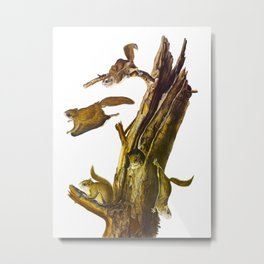Flying Squirrel Vintage Hand Drawn Illustration Metal Print