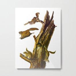 Flying Squirrel Vintage Hand Drawn Illustration Metal Print