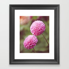 Chrysanthemums in Afternoon Light Framed Art Print
