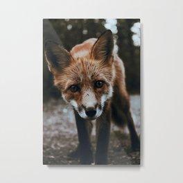 Curious Fox / Alaska Metal Print