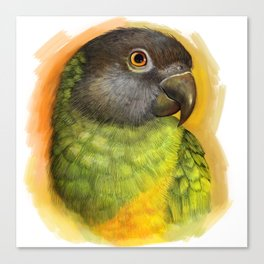 Senegal parrot realistic painting Canvas Print