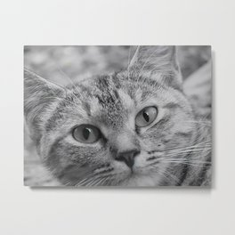 Black and White Cat Face Metal Print