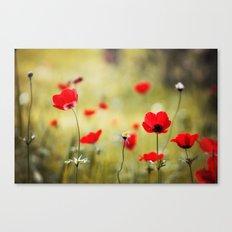 Wild Anemones Canvas Print