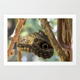 Owl butherfly Art Print