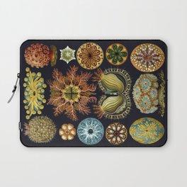 Ernst Haeckel Sea Squirts Ascidiae Black Background Laptop Sleeve