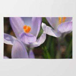 Crocus flowers Rug