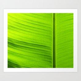 banana tree leaf Art Print