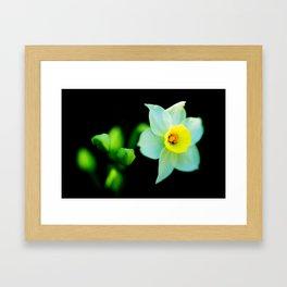 Translucent Flower - Color Version Framed Art Print