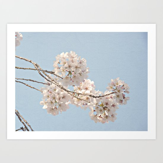 Spring Botanical -- Fluffy Cherry Tree Buds & Flowers On Carolina Blue Sky 1 Art Print