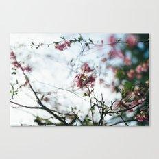 spring blur Canvas Print