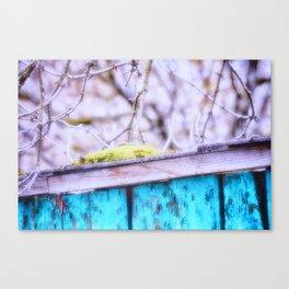 A Little Moss Canvas Print