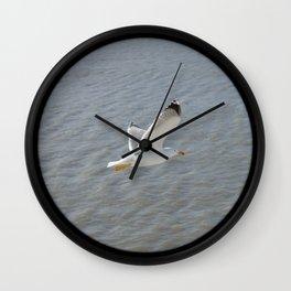 Seagull, bird,  Wall Clock