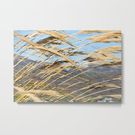 Pampas Screen Metal Print