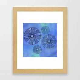 Blue Sea Urchin Framed Art Print