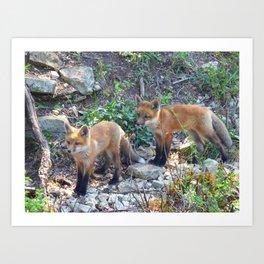 fox 2018-6 Art Print