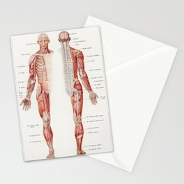 An antique  of the human nervous system by Galtier-Boissiere and Emile (1912) Stationery Cards