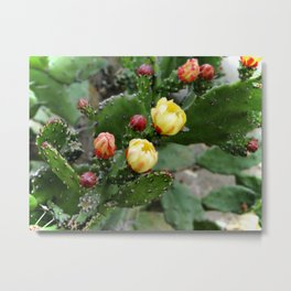 Cactus with flower Metal Print