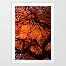 Eloquence - Autumn Maple Leaves Art Print