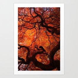 Eloquence - Autumn Maple Leaves Art Print