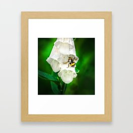 The Bumble Bee Framed Art Print