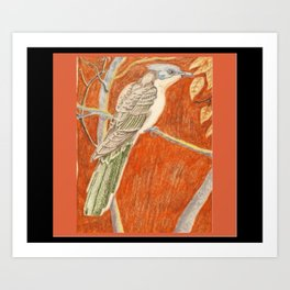 Great Spotted Cuckoo Art Print