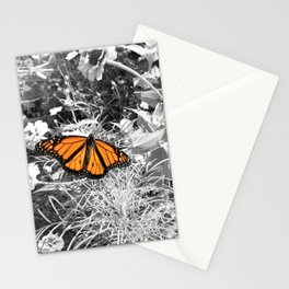 the Butterfly Stationery Cards