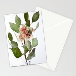 Sea Urchin Hakea Native Australian Flower Stationery Cards