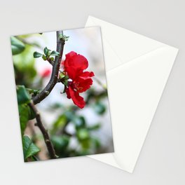 Wee Red Flowers Stationery Cards