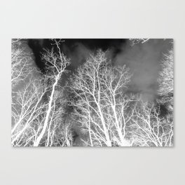 Black and whit naked trees forest, negative version Canvas Print