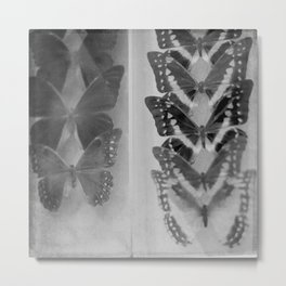 Case of Butterflies in Black and White Metal Print