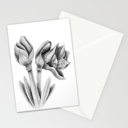 Black and white Amaryllis Stationery Cards