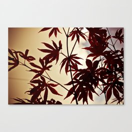 Red Hands  Canvas Print