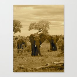 Elephant sepia Canvas Print