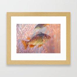Love is a Fish Framed Art Print