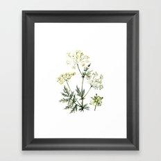 watercolor dill Framed Art Print