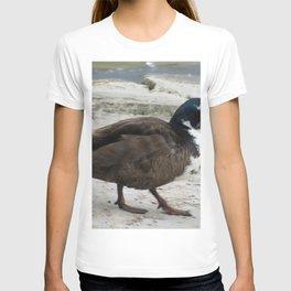 Short Legged Duck at Jensen Nature Reserve T-shirt