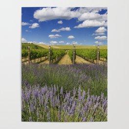 Countryside Vinyard Poster