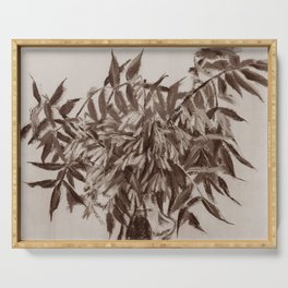 Ash-tree in sepia,floral art, monochrome Serving Tray