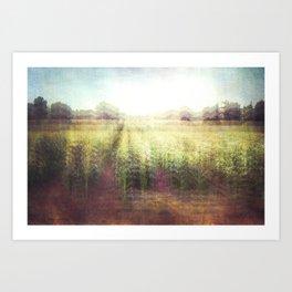 cornfields Art Print