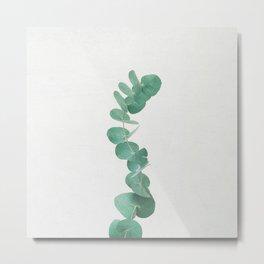 Eucalyptus III Metal Print